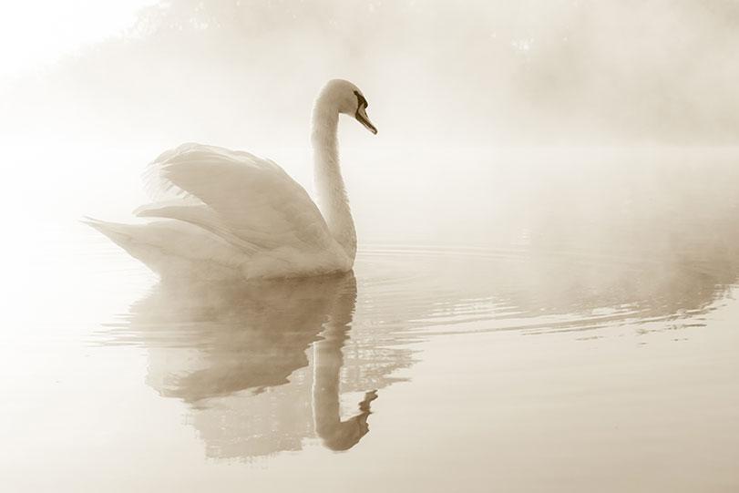 swan-park-img