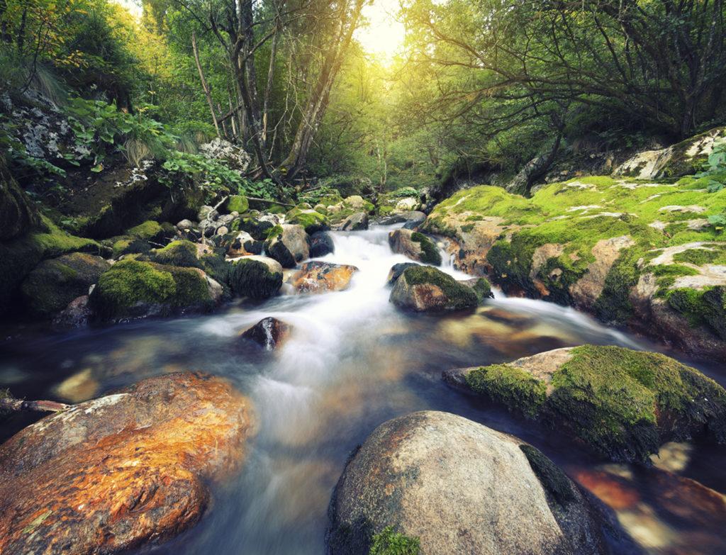 Water stream in an idylic forest (?unikov vodni gaj, Slovenia).